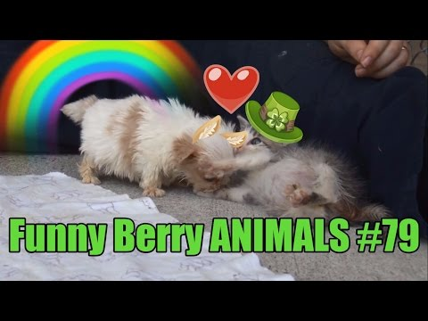 Most charming kittens and puppies August 2016 | Funny Berry Animals #79