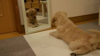 鏡に映る自分と遊びたいのですが・・・
