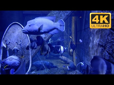 4K Virtual Aquarium. Download in UHD or Full HD