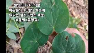 음양곽(삼지구엽초)효능 먹는법/남자의 힘을샘솟게 여성의…