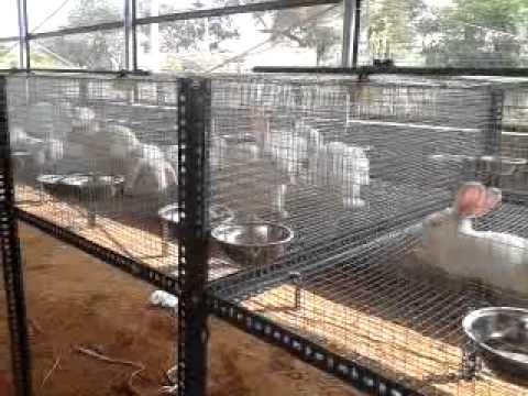 Poultry Farming in India (Full Information & Business Guide)