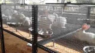 New Rabbit Farm Constructed By Bensiyaa Rabbit Farm