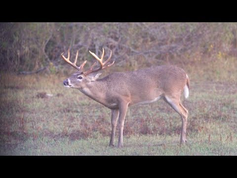 Bow Hunting King Ranch (Plus How To Field Dress A Deer)