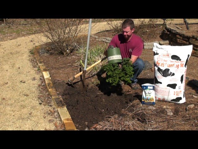 How to Properly Plant Trees & Shrubs
