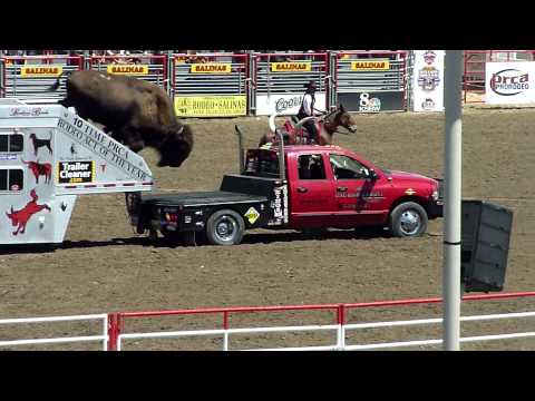 trained Bisons in Salinas Rodeo