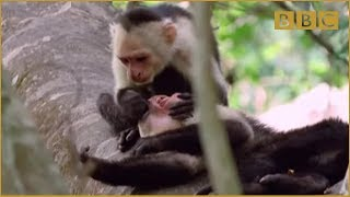 Funny Talking Animals - Walk On The Wild Side - Episode Three Preview - BBC One