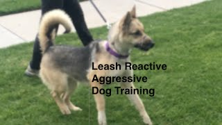 Leash Aggression Dog Training Part 2