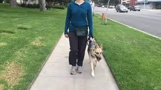 Leash Aggression Dog Training Part 2