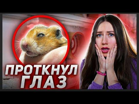 ХОМЯК ЭДДИ ПРОТКНУЛ ГЛАЗ - ЗАВТРА ОПЕРАЦИЯ!   Elli Di Pets