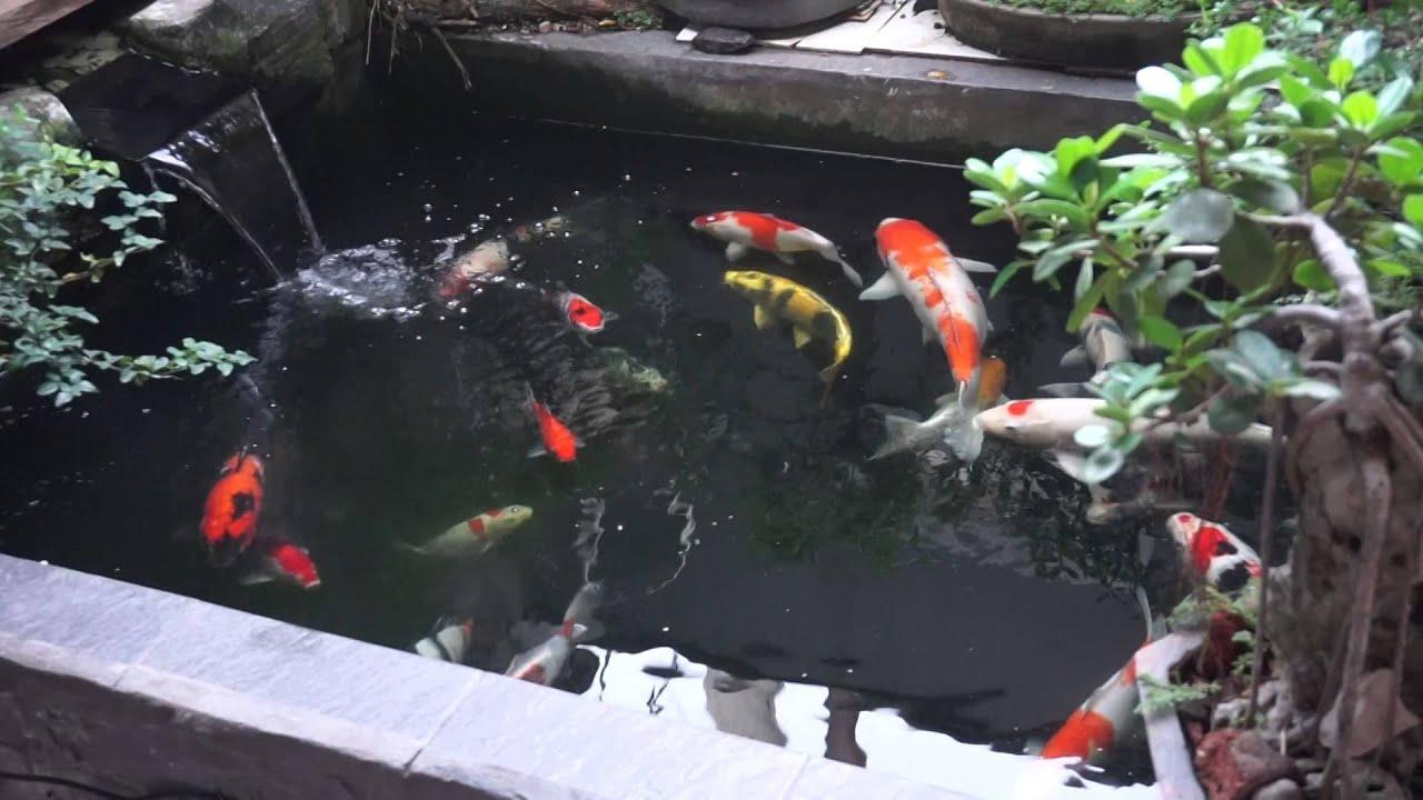 kolam ikan koi di depan rumah  YouTube
