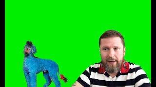 Телеканал НАШ и голубой пудель