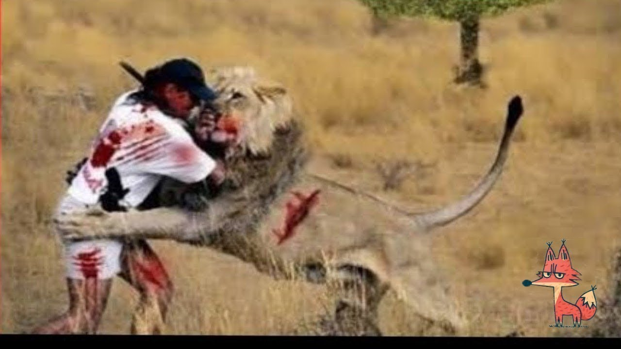 Most amazing wildlife attacks on humans and animals