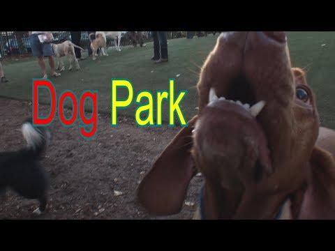 Dog Park Playground In Washington, DC, S Street