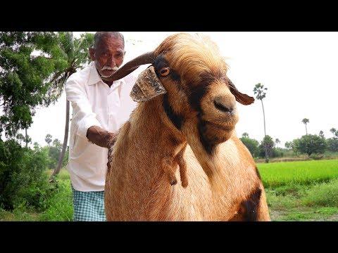 Traditional Full Goat Biryani | Full Goat Recipe By Our Grandpa | Giant Lamb Biryani Grandpa Style