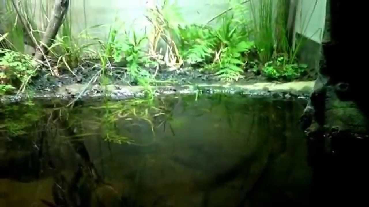 Fish tank terrarium - Terrarium Aquarium Grenouille