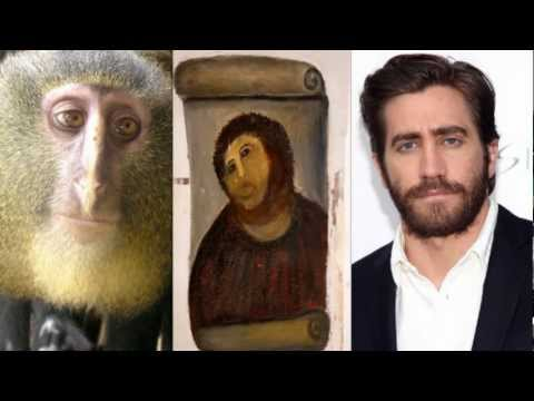 New Species of Monkey Discovered in Congo,Africa!(Terrific Thursday #6)