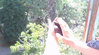 видео Птица залетела в окно дома или на балкон: народная примета и ее значение