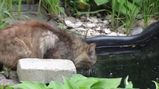 Кот пришел на водопой