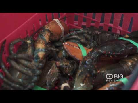 The Lobsterman Fish Market Vancouver For Seafoods And Shellfish
