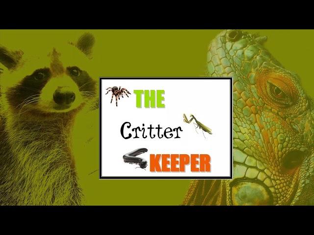 Saving Bumblebees