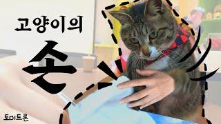 [장난감 나라의 트론이] EP. 34 고양이의 손 │ …