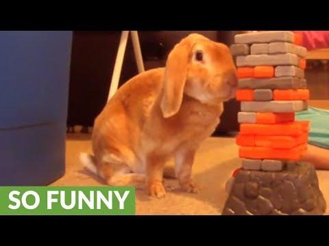 Bunny rabbit plays Jenga with little girl
