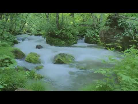 Forest Sounds - Gentle Babbling Brook Water Sounds For Sleeping