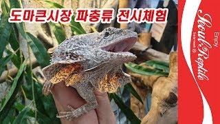 두 번째 파충류 전시체험전, 이번에는 호주 도마뱀! 도…