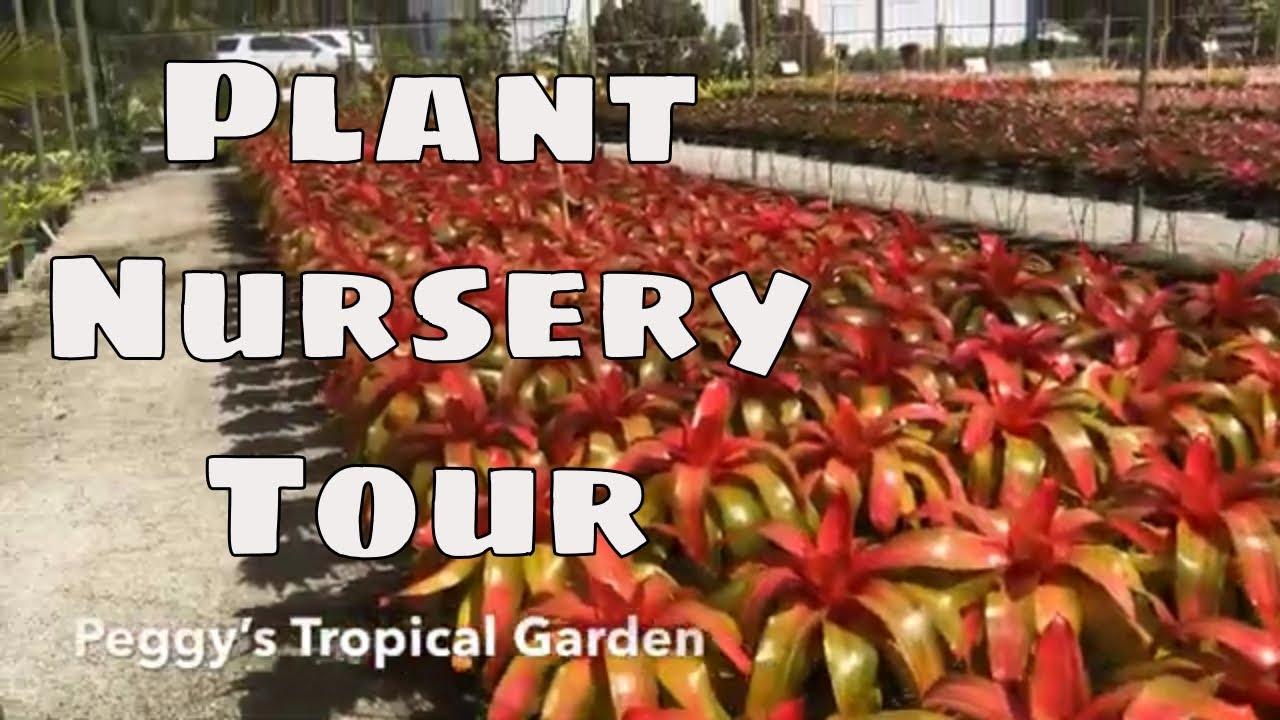 South Florida Bromeliad Nursery Tour