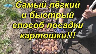 Как посадить картошку быстро и очень легко. Мы садим всегда только так!