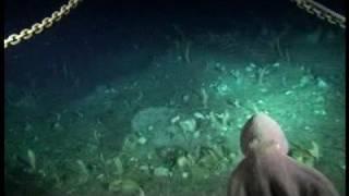 Descubiertas en el fondo del mar