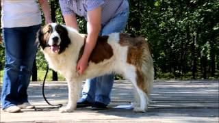 Семинар для владельцев собак породы МОСКОВСКАЯ СТОРОЖЕВАЯ (Часть 1)