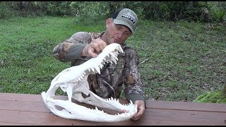 How to Euro Mount an Alligator ft. Whitebone Creations