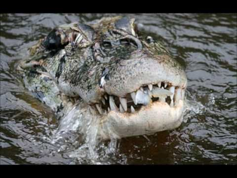 Top 10 Most Dangerous Reptiles (NO VENOMOUS REPTILES ...