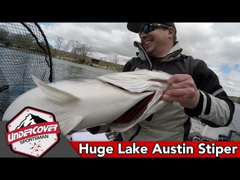 Huge Lake Austin Striper On Megbass MagDraft10