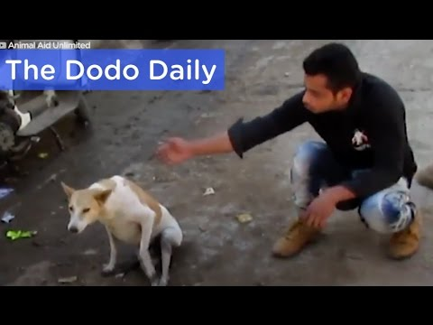 Dog Hit By Car Miracle Rescue & Recovery: Best Animal Videos | The Dodo Daily Ep. 17