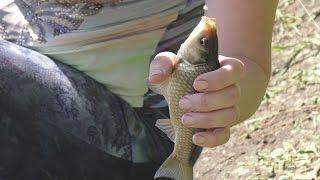 Рыбалка. Ловля карася на поплавочную удочку.My fishing.(Рыбалка. Ловля карася на поплавочную удочку.My fishing. https://www.youtube.com/channel/UCwzp3SPFrCSh2bX9UtIXEWQ https://youtu.be/EQIRP_pboZc ..., 2016-04-20T13:47:26.000Z)
