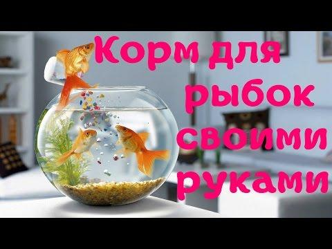 Чем можно покормить рыбок в домашних условиях