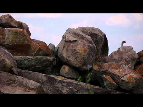 Nomad Tanzania's Serengeti Safari Camp