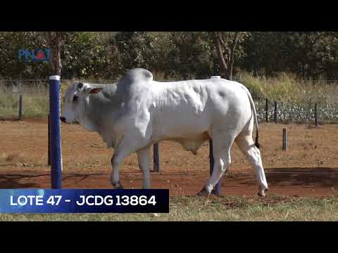 LOTE 47 - JCDG 13864 - NELORE