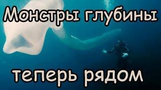 Монстры на дне океана  Неведомые тайны морских глубин Морские чудовища Монстры Глубины