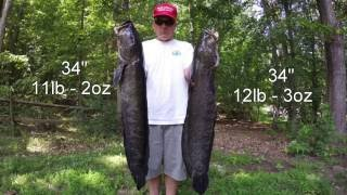 Best Snakehead Bowfishing Video Ever - GIANT Potomac River Snakeheads!