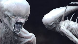 The NEOMORPH Explained.