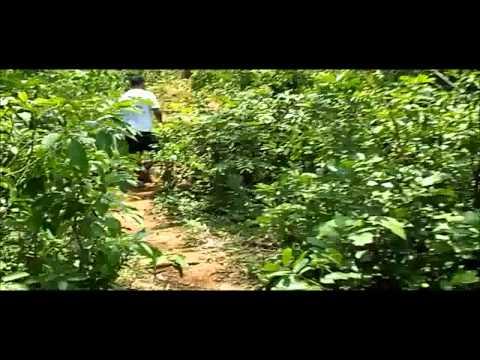 Panchalingeswar, Nilgiri, Chandipur, Kuldiha Forest, Devkund in Orissa. - Part 7