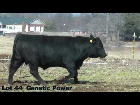 Lot 44 D137 J&K Genetic Power