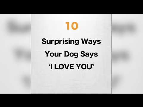 10 Surprising Ways Your Dog Says I Love You