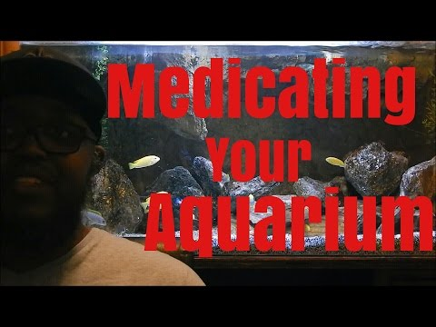 How To Medicate Your Aquarium