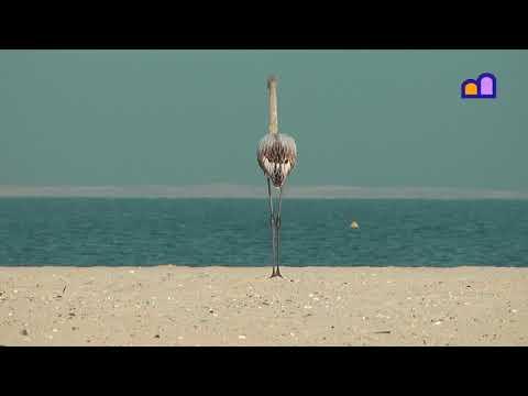 Oman - Khuzam Beach
