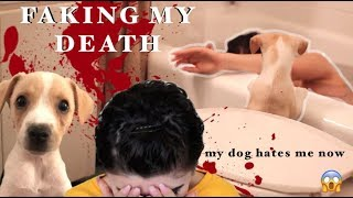 One of Hannah Forcier's most viewed videos: PRANKING MY PUPPY - My Dog Reacts to me DYING!