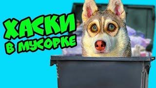 ХАСКИ В МУСОРКЕ (Хаски Бублик) Мистер Бубл Говорящая Собака